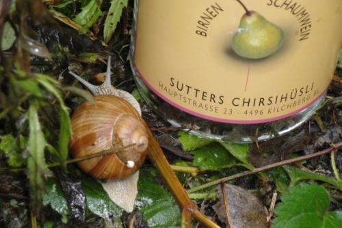 Wisenberg abends – Nachhaltigkeit mit Weitsicht erleben