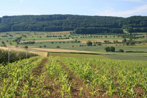 Landwirtschaft früher - heute - morgen?
